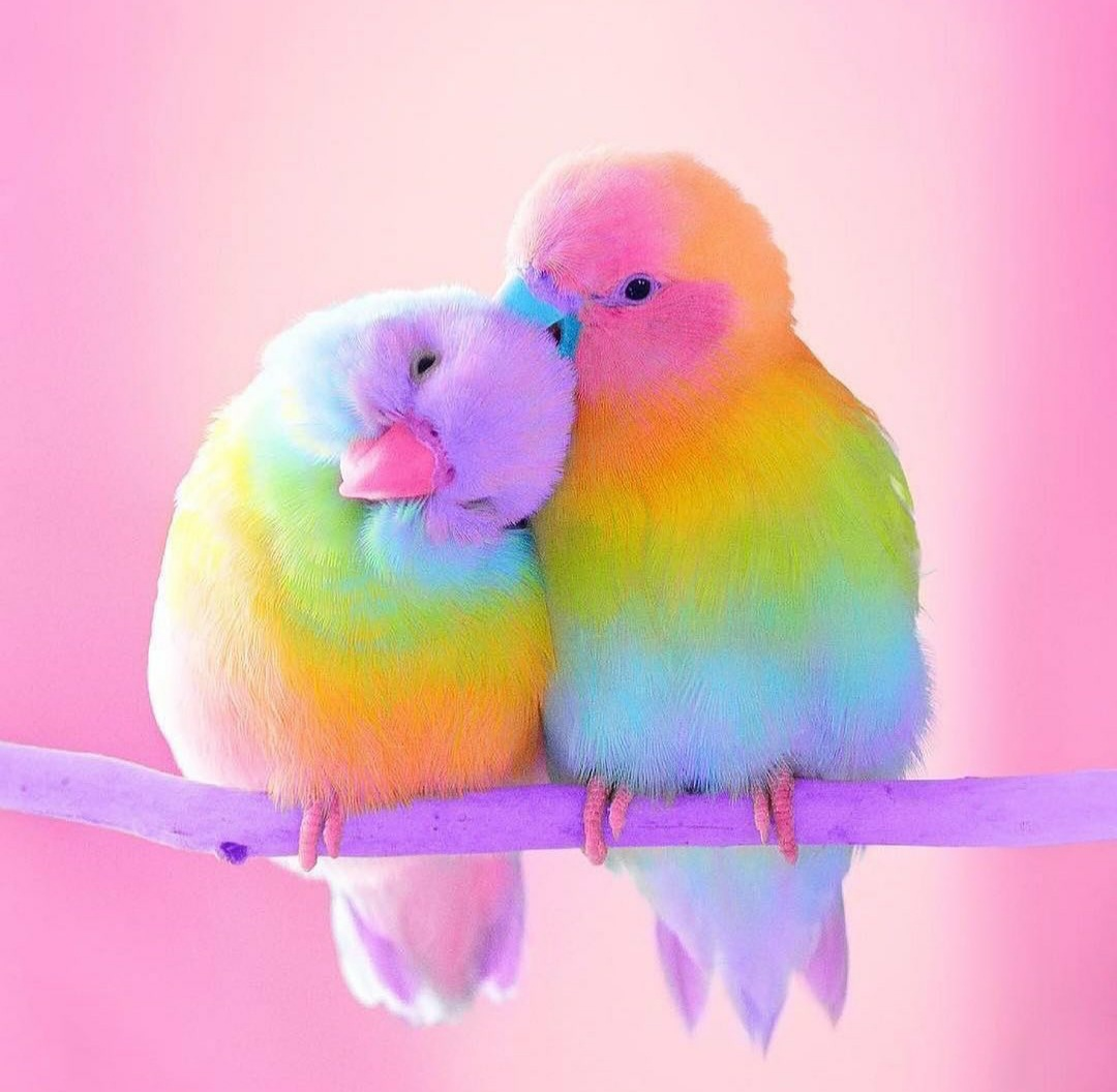 Cutest Birds Ever